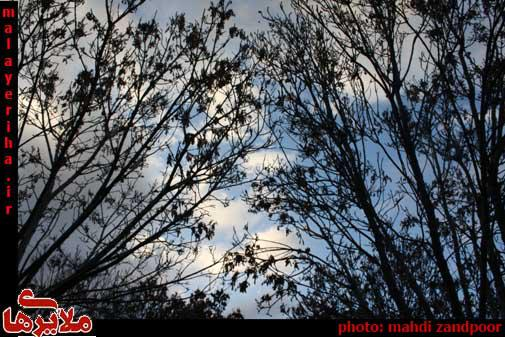 جاماندههای پاییز در زمستان